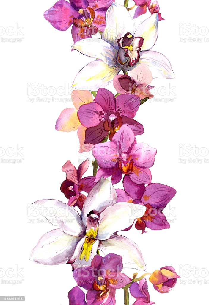 Floral seamless frame border with bright exotic flowers orchid. Aquarelle vector art illustration