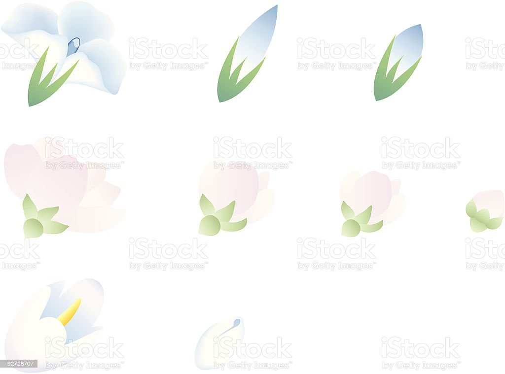 Flower buds royalty-free stock vector art