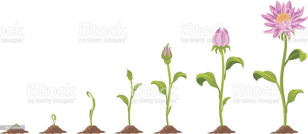 Flower vector art illustration