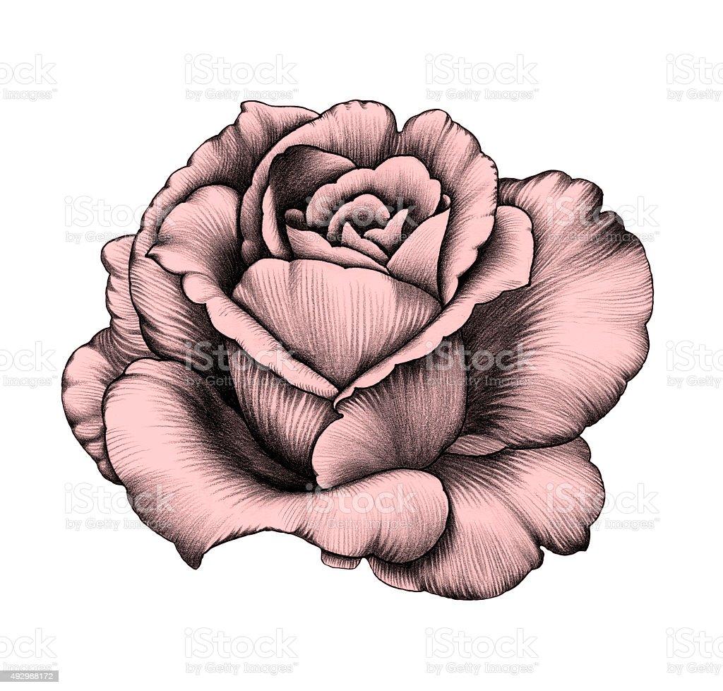 Flower, Pencil Drawing. vector art illustration