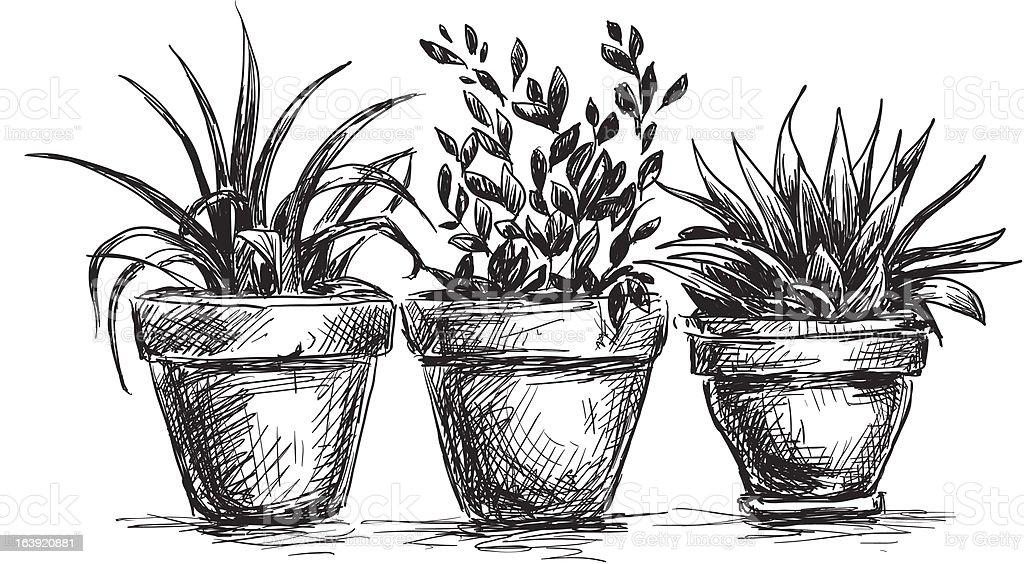 Flower pots vector art illustration