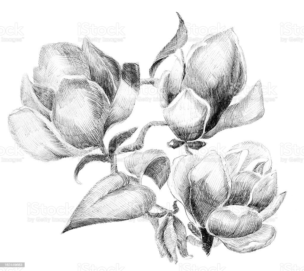 Flower sketch bouquet vector art illustration