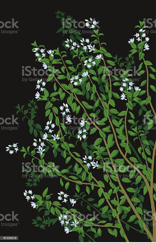 Flowering shrub royalty-free stock vector art