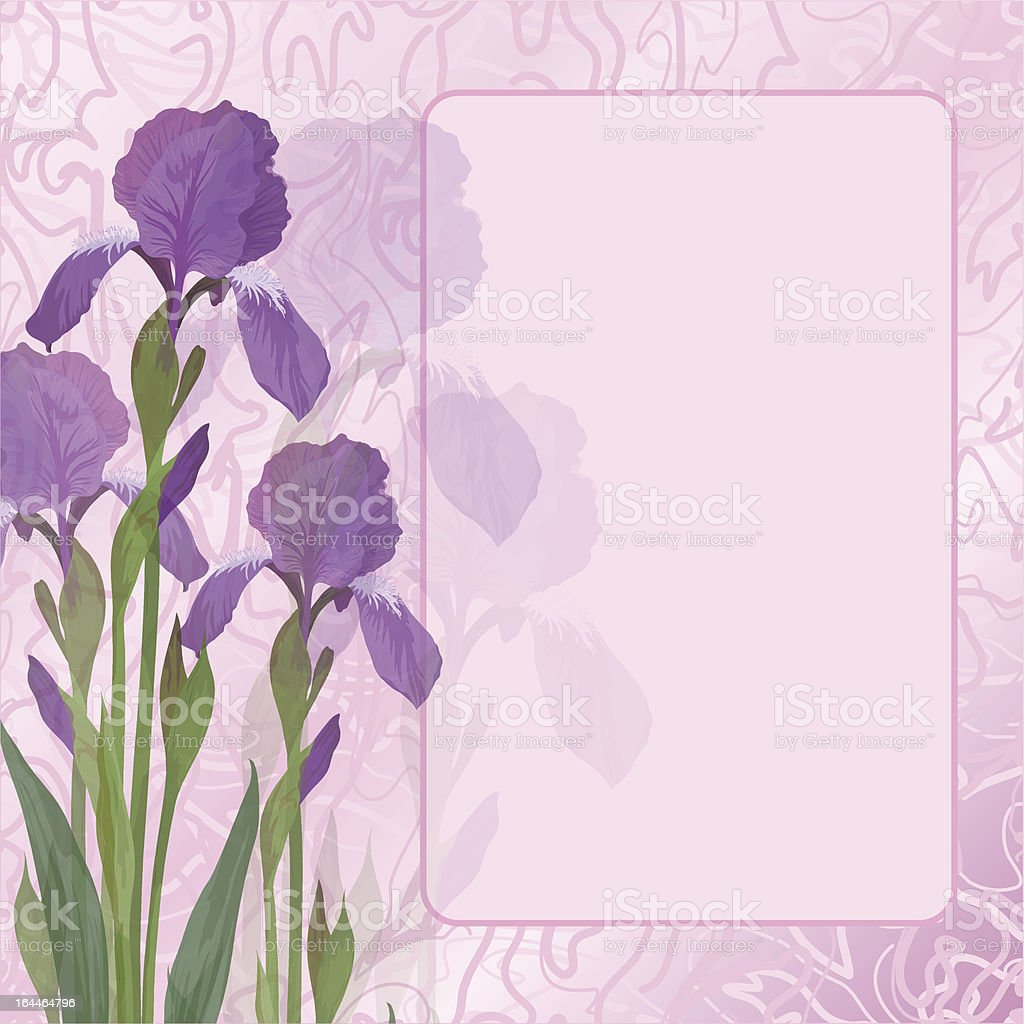 Flowers iris on pink background royalty-free stock vector art