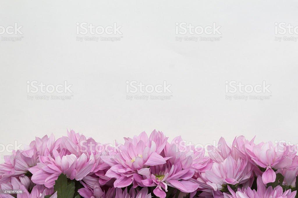 flowers isolated on white background vector art illustration