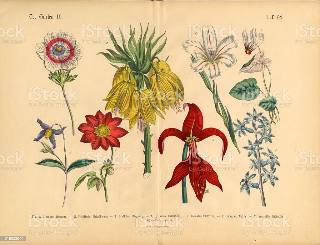 Flowers of the Garden, Victorian Botanical Illustration vector art illustration