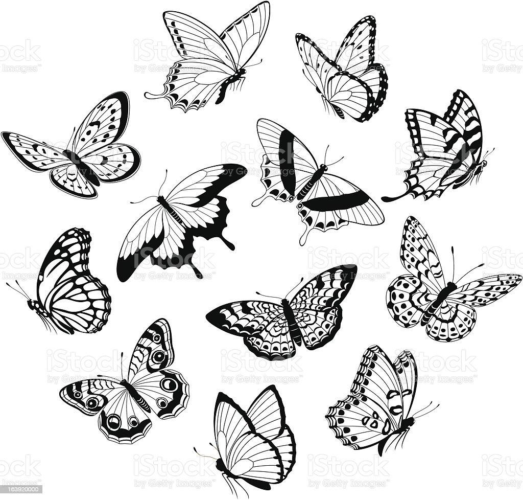 Flying black & white butterflies royalty-free stock vector art