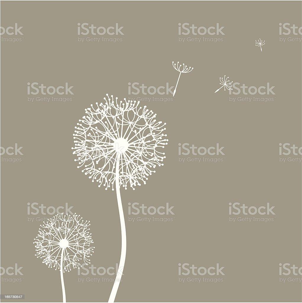 Flying dandelion seeds vector art illustration
