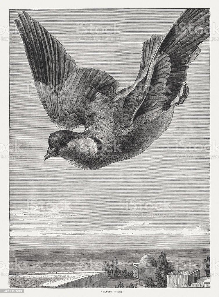 Flying home (Carrier pigeon), published in 1873 vector art illustration