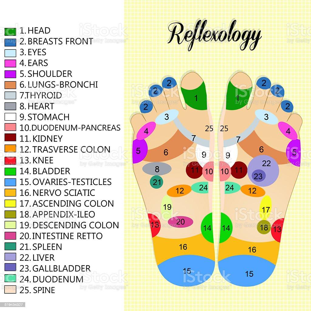 Foot reflexology chart vector art illustration