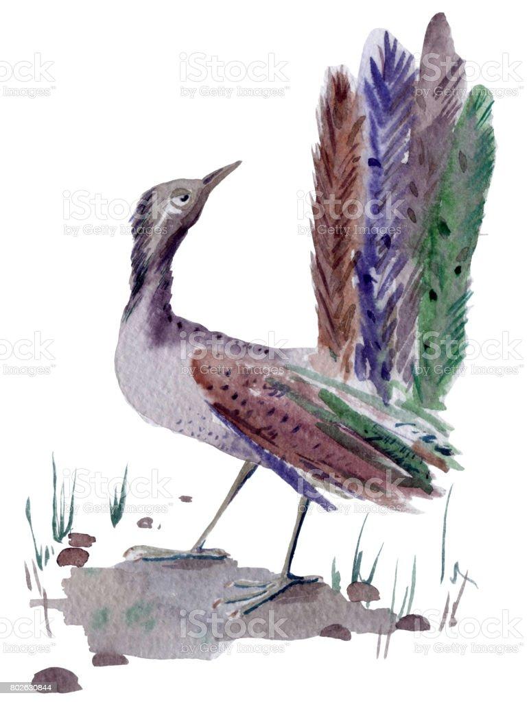 Forest bird vector art illustration