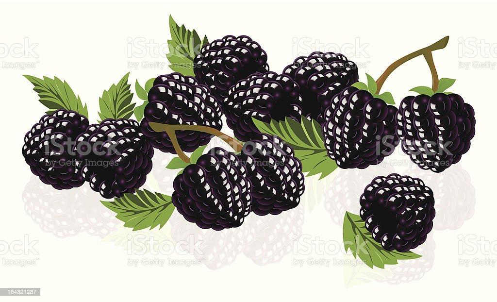 Forest blackberries royalty-free stock vector art