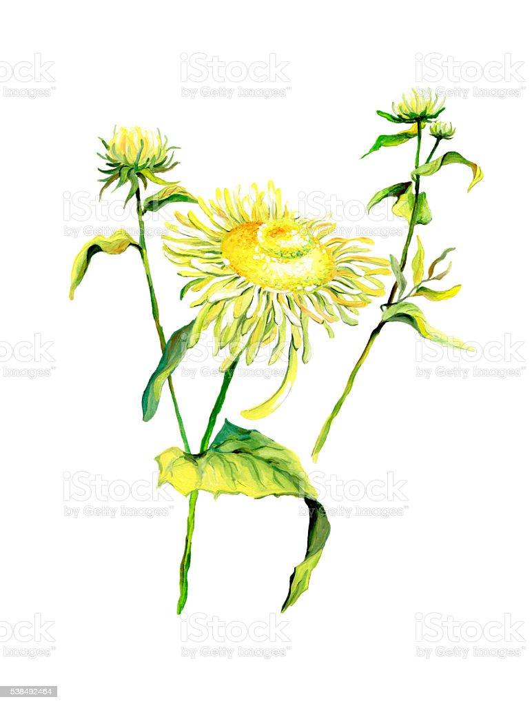 Forest flower chamomile isolated on white background vector art illustration