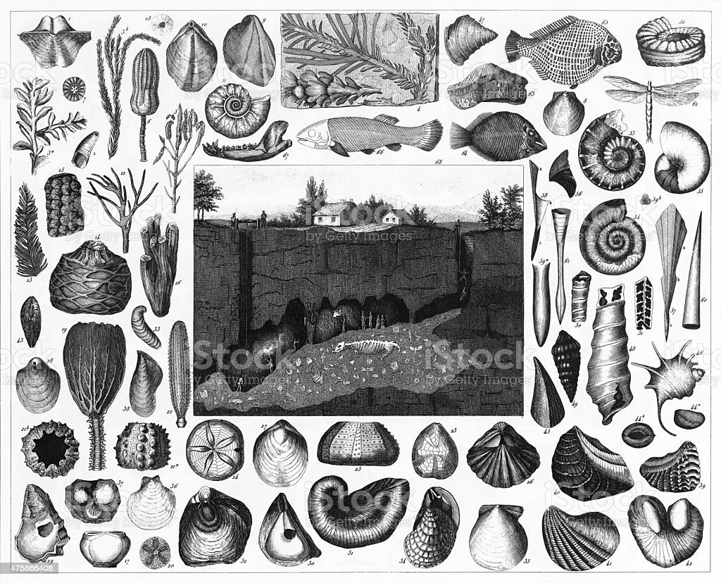 Fossils and Section of the Wirksworth Cave Engraving vector art illustration