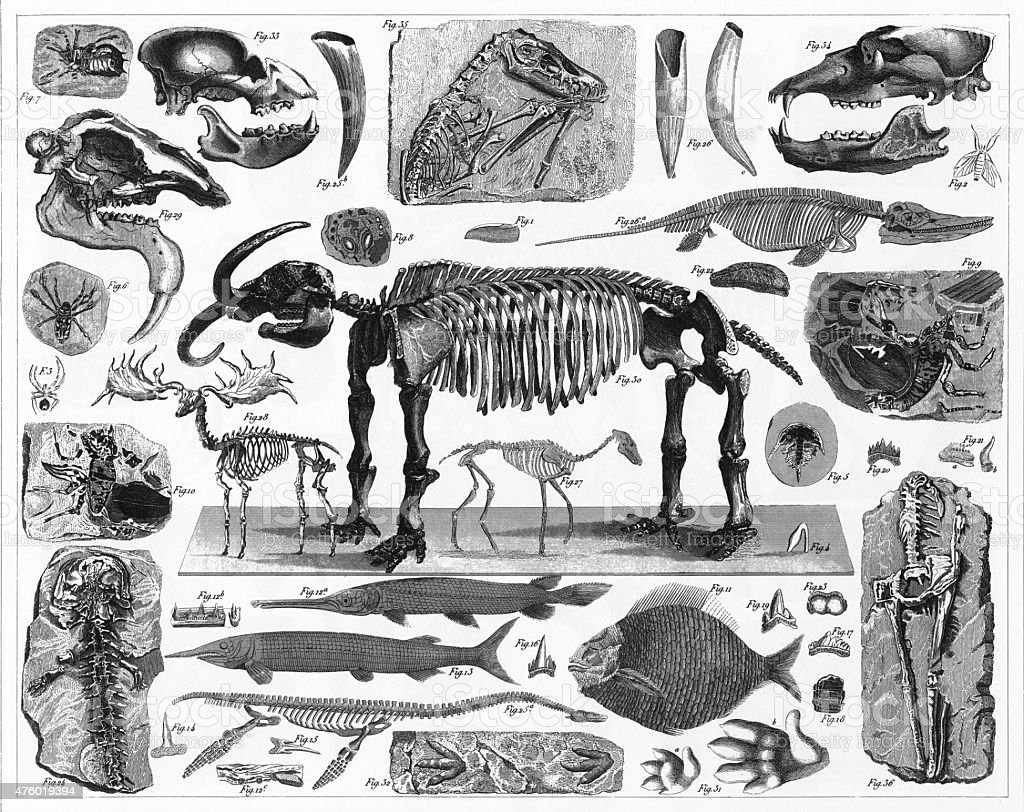 Fossils, Tracks and Skeletons Engraving vector art illustration