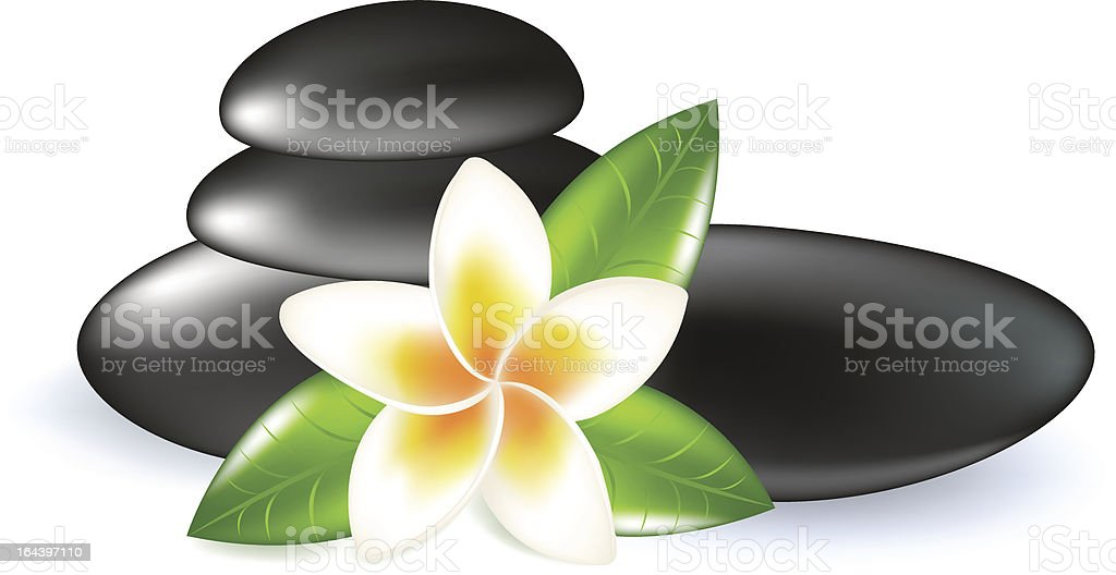 Fragipani With Leaves And Stones vector art illustration