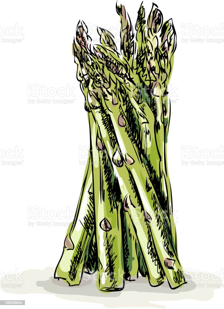 Fresh Asparagus vector art illustration