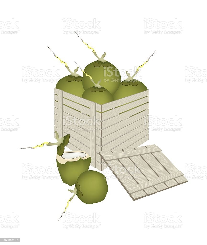 Fresh Green Coconuts in Wooden Cargo Box royalty-free stock vector art