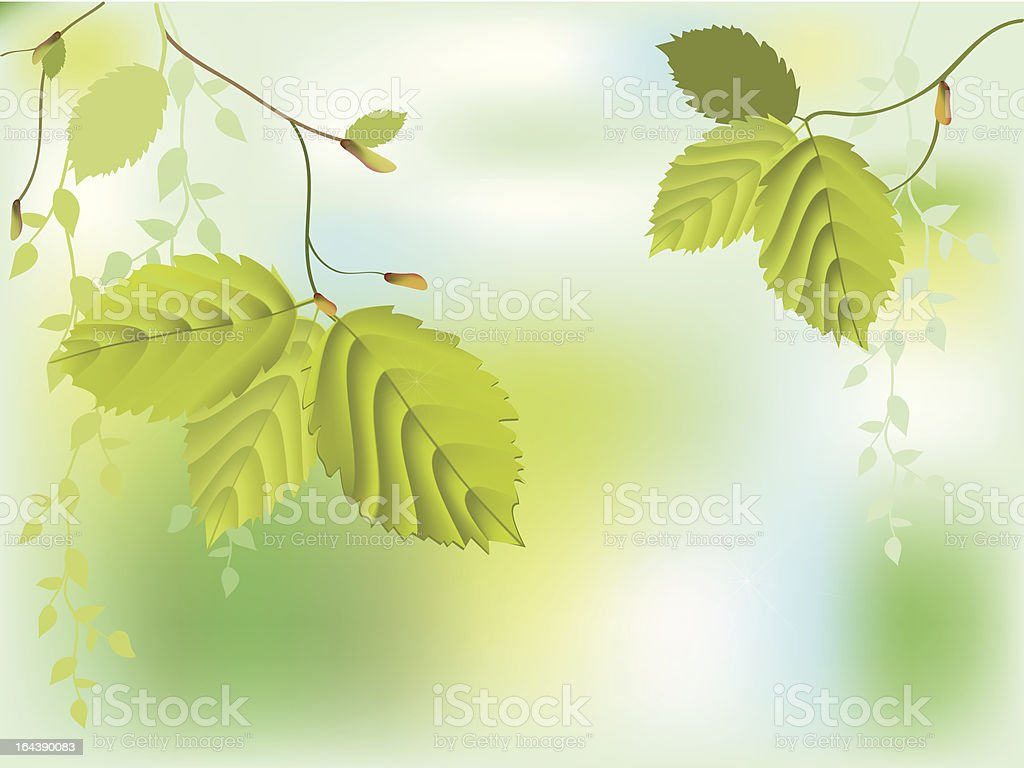 Fresh green leaves royalty-free stock vector art