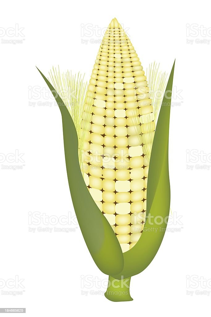 Fresh Sweet Ears of Corn with Husk and Silk royalty-free stock vector art