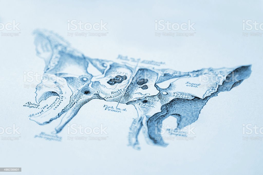 grafika wektorowa, ikony, ilustracje kosc klinowa na licencji, Sphenoid