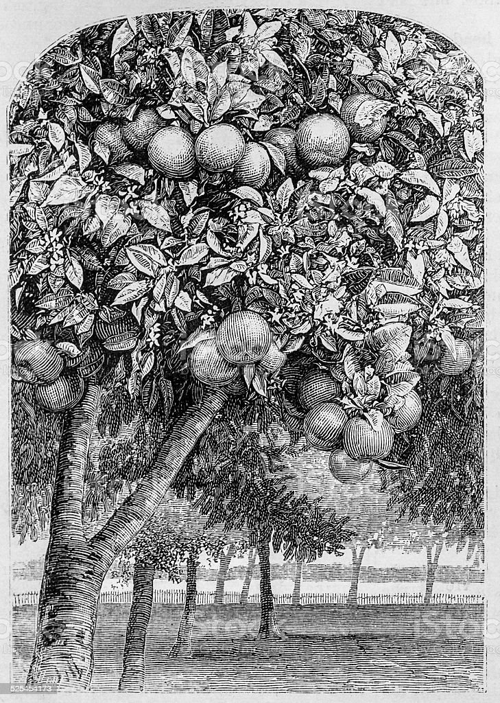 Fruit and Flowers vector art illustration