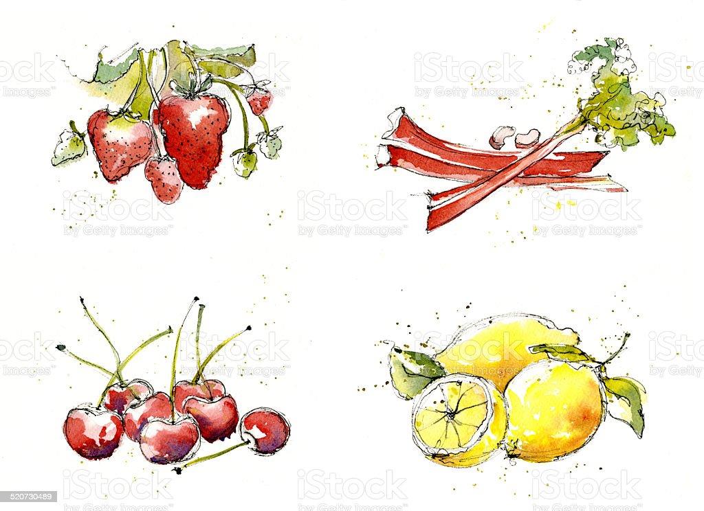 Fruit Illustrations painted in watercolour vector art illustration
