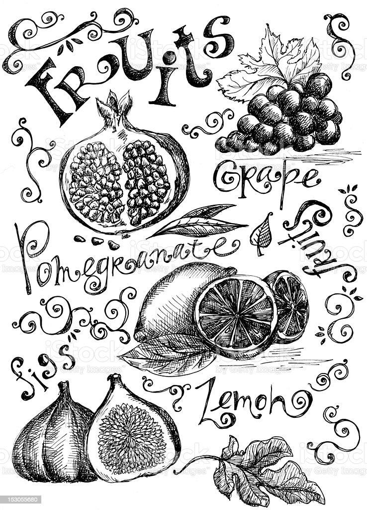 Fruits vector art illustration