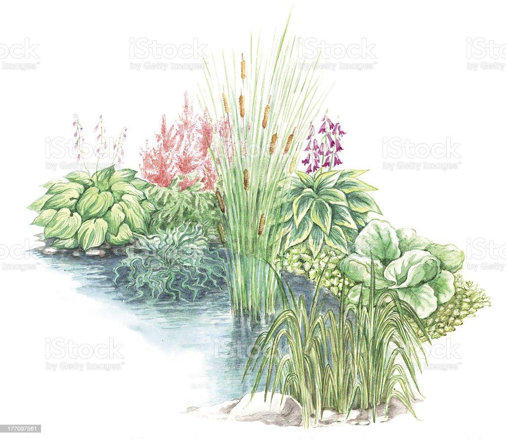 Garden design nearly a water body vector art illustration