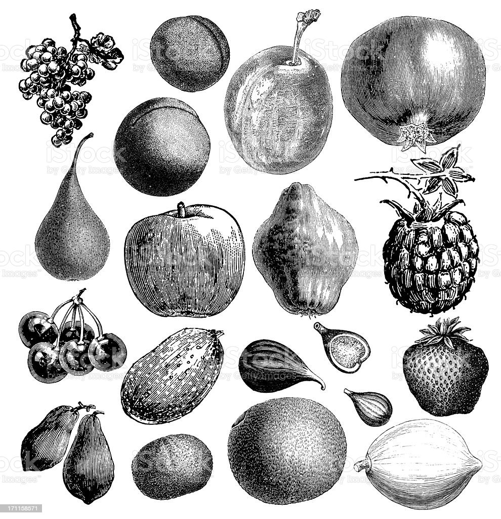 Garden Fruit Illsutrations | Antique Farming Food Clipart royalty-free stock vector art