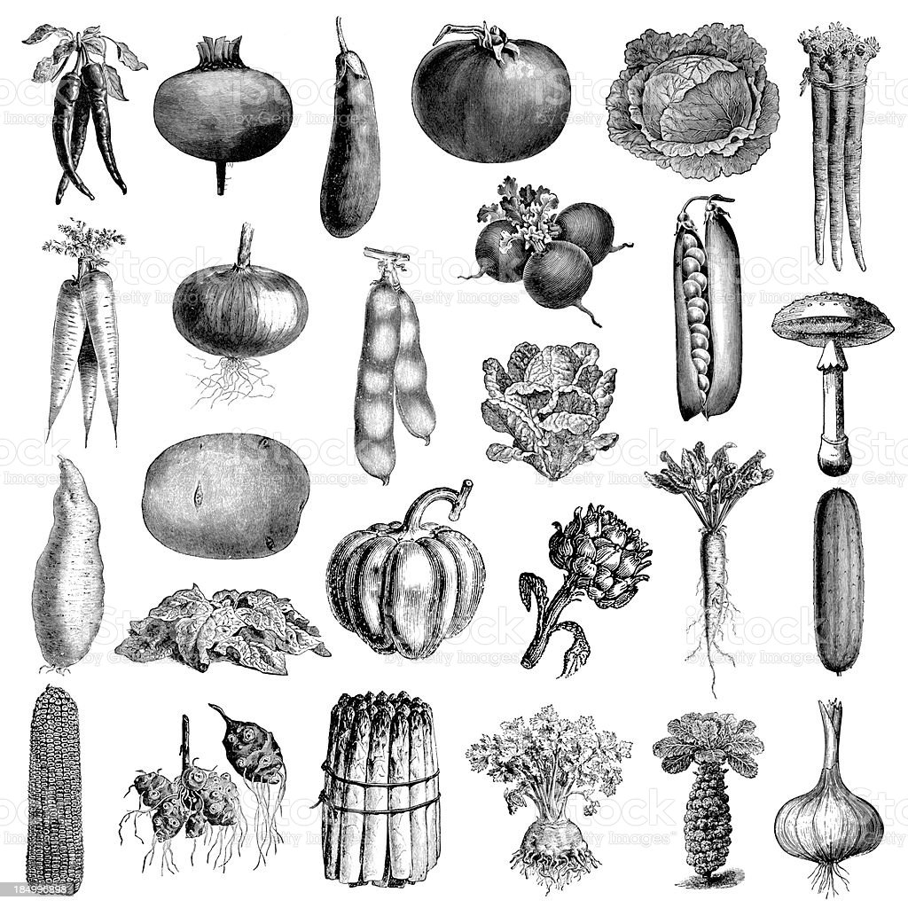 Garden Vegetable Illsutrations | Antique Farming and Food Clipart royalty-free stock vector art
