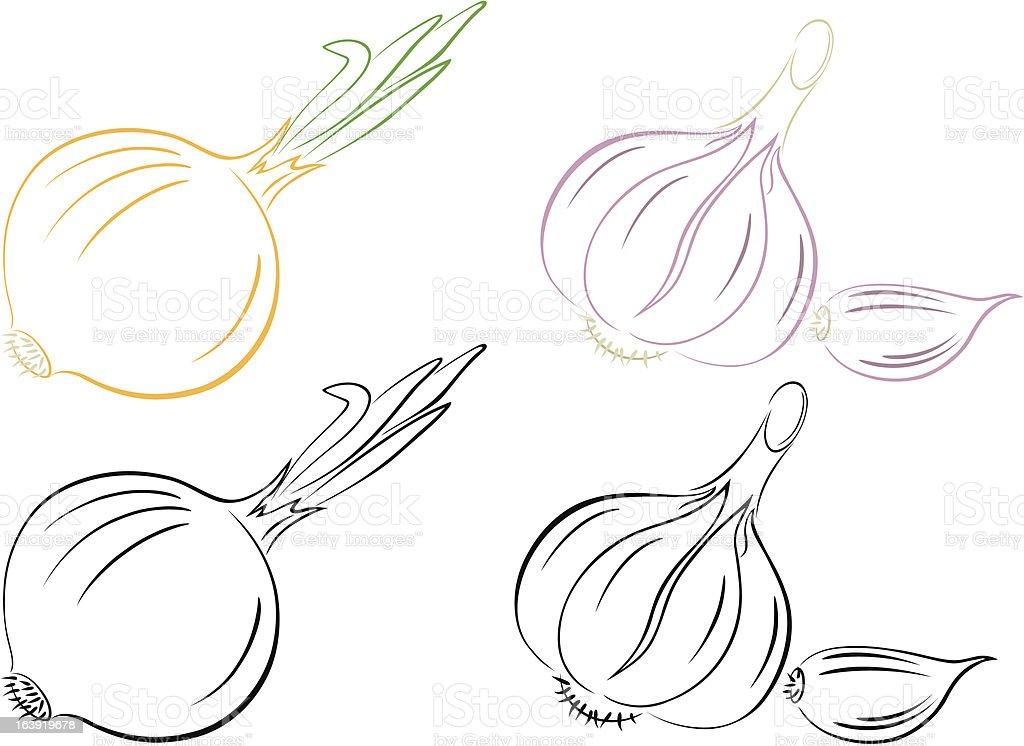 garlic onion vector art illustration