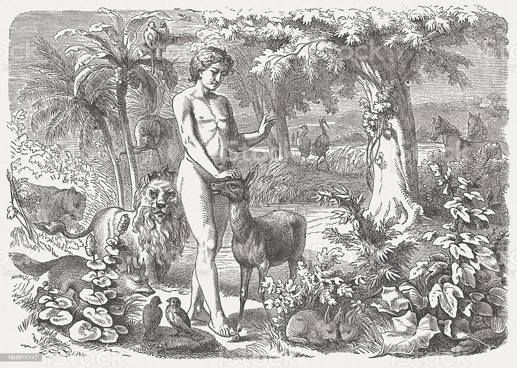 Genesis (Genesis 2, 19-20), wood engraving, published in 1877 royalty-free stock vector art