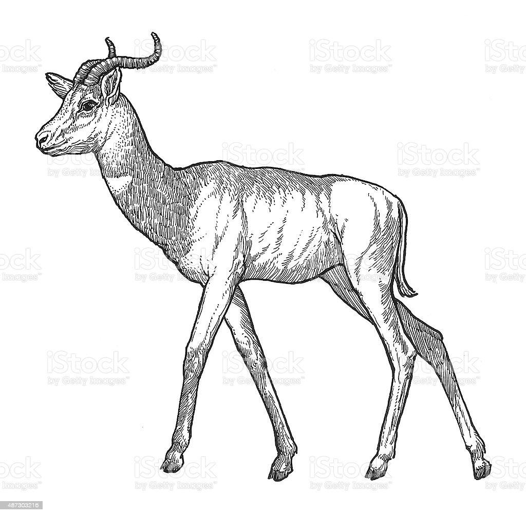 Geranuk Antelope Lizenzfreies vektor illustration