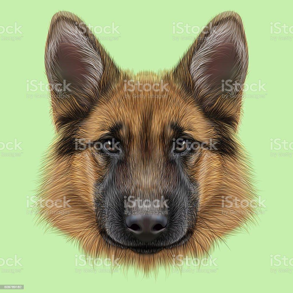 German Shepherd Dog vector art illustration