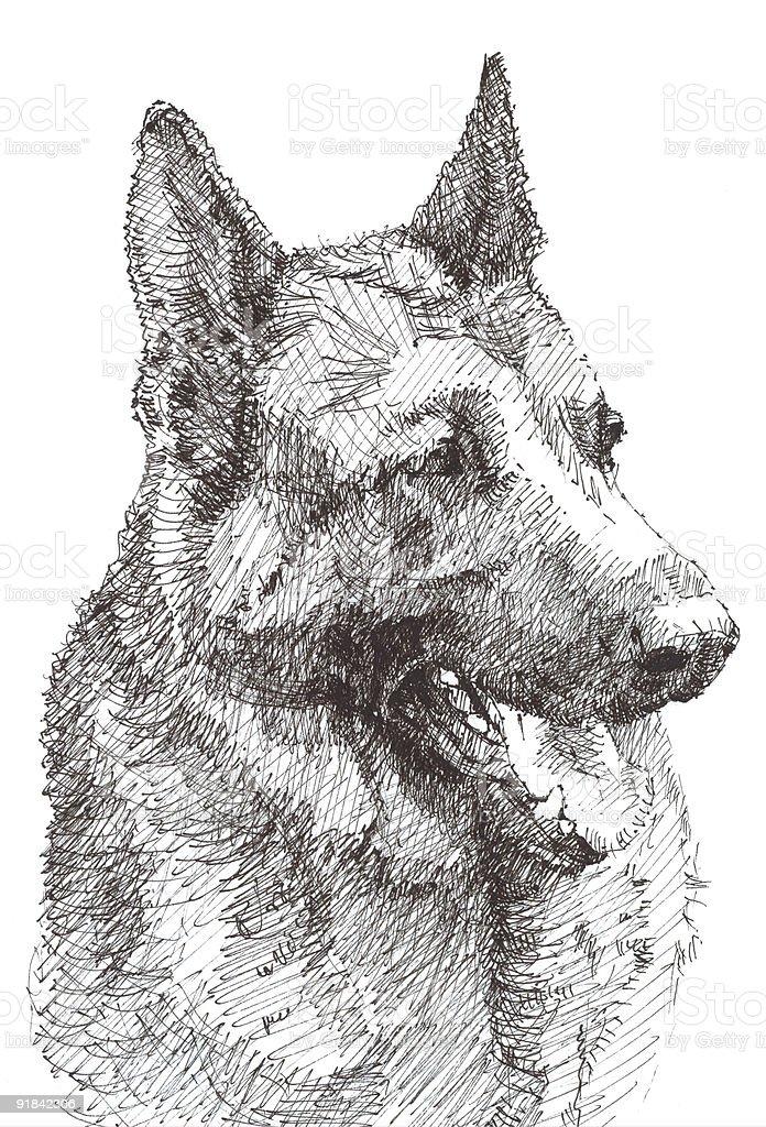 German Shepherd royalty-free stock vector art