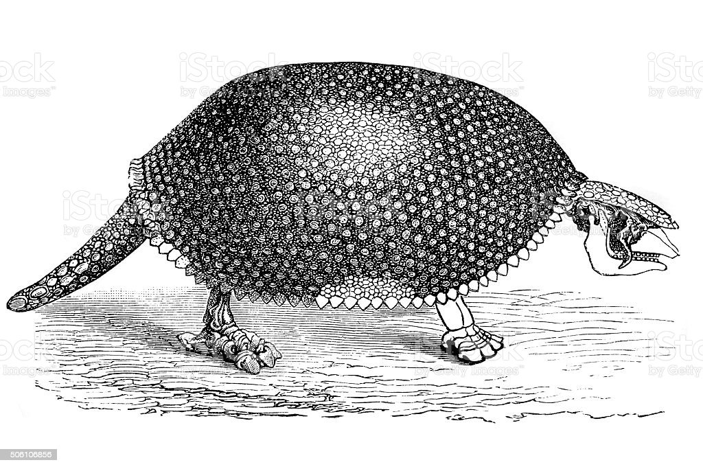 giant armadillo (glyptodon clavipes) vector art illustration