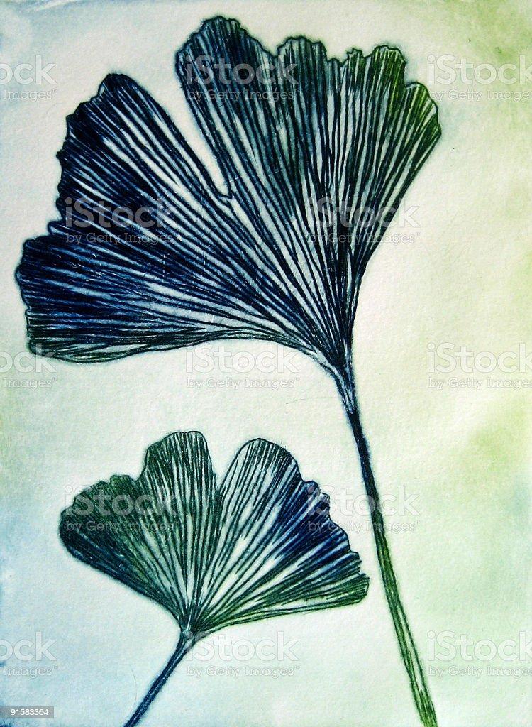 Gingko biloba - Two Leaves vector art illustration