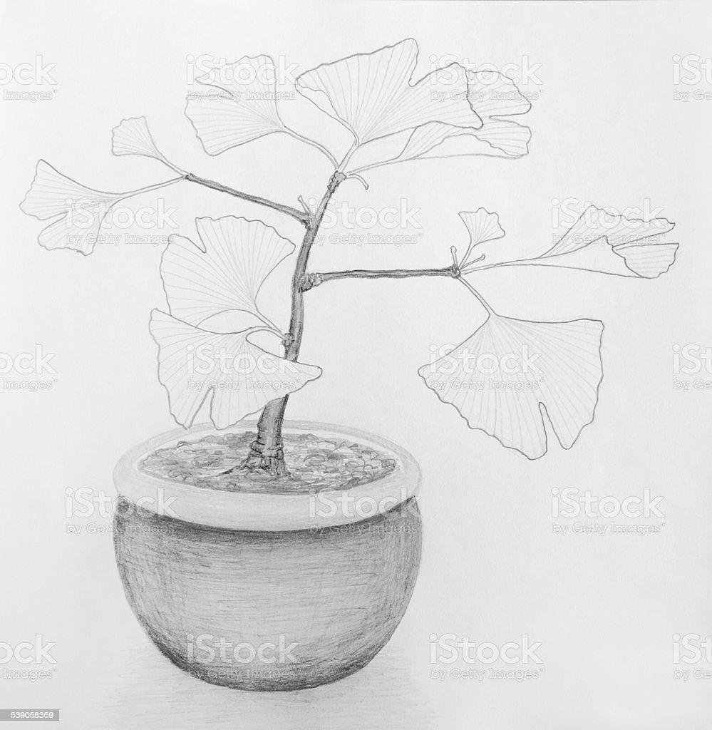 Ginkgo Plant Pot vector art illustration