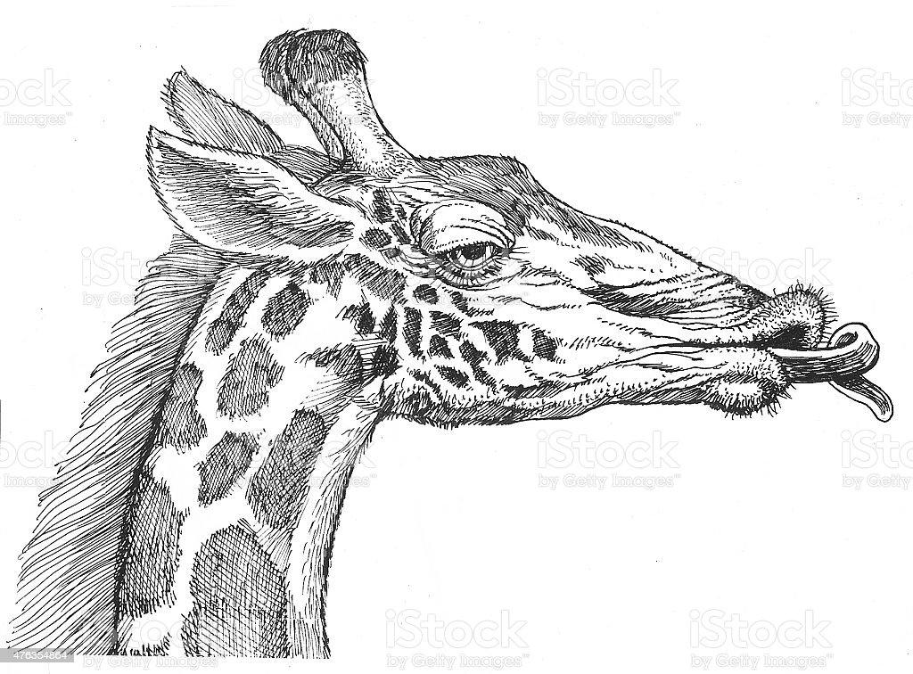 Giraffe Porträt Lizenzfreies vektor illustration