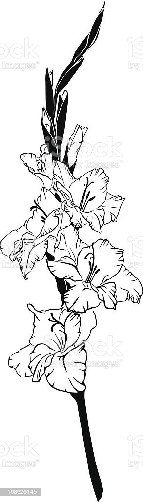 gladiolus royalty-free stock vector art