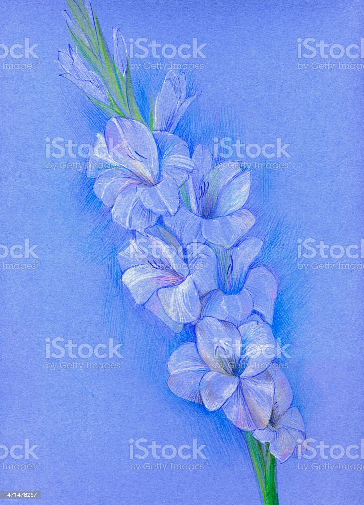 Gladiolus (pastel) royalty-free stock vector art