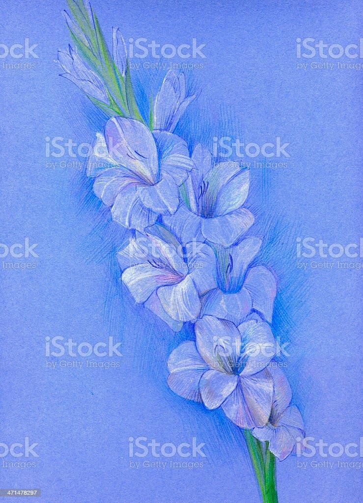 Gladiolus (pastel) vector art illustration