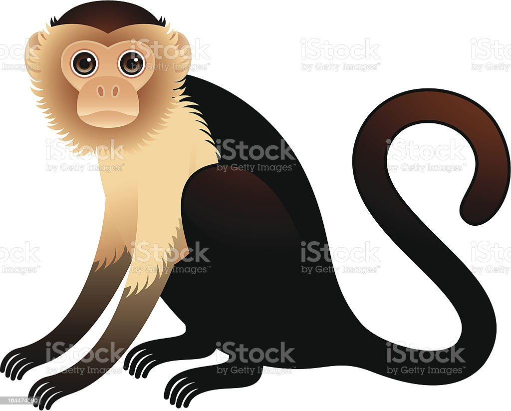 Golden Bellied Capuchin Illustration vector art illustration