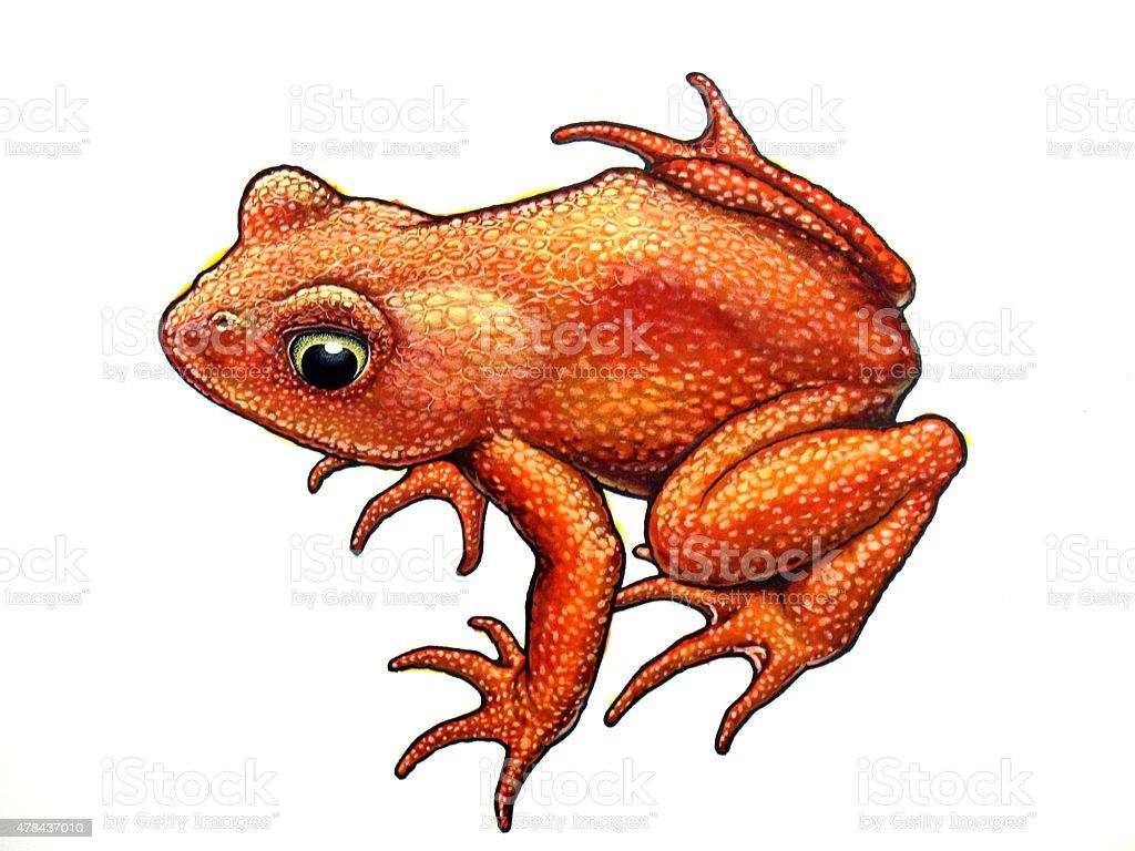Golden Frog Sitzbereich Lizenzfreies vektor illustration