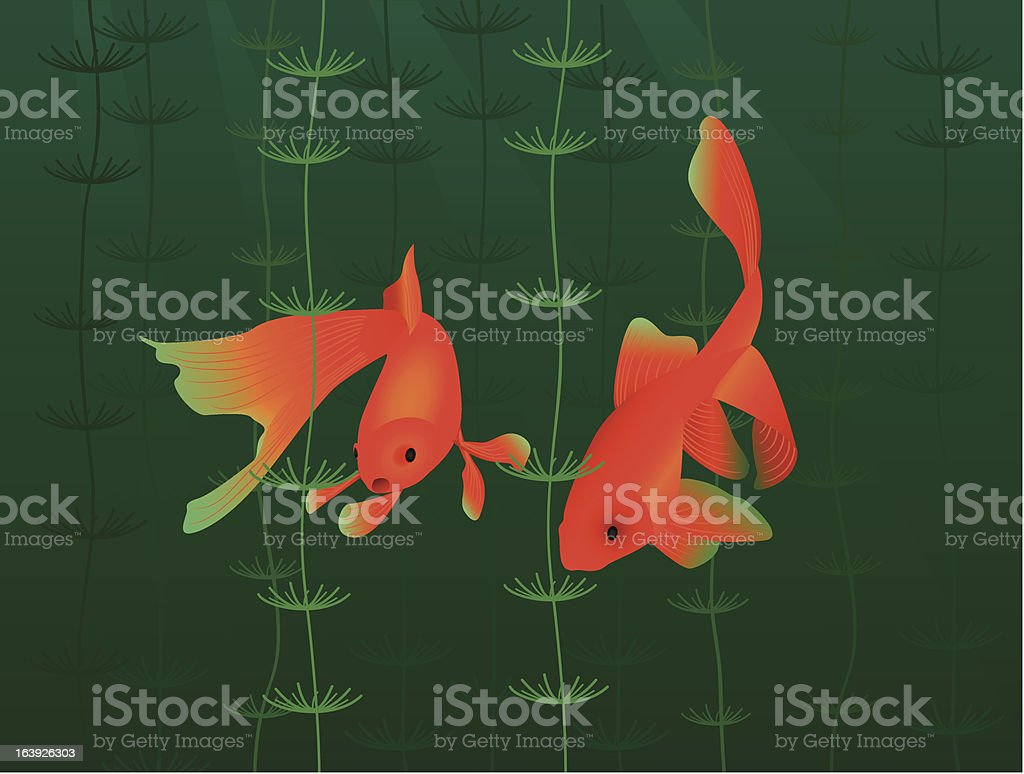 goldfishes royalty-free stock vector art