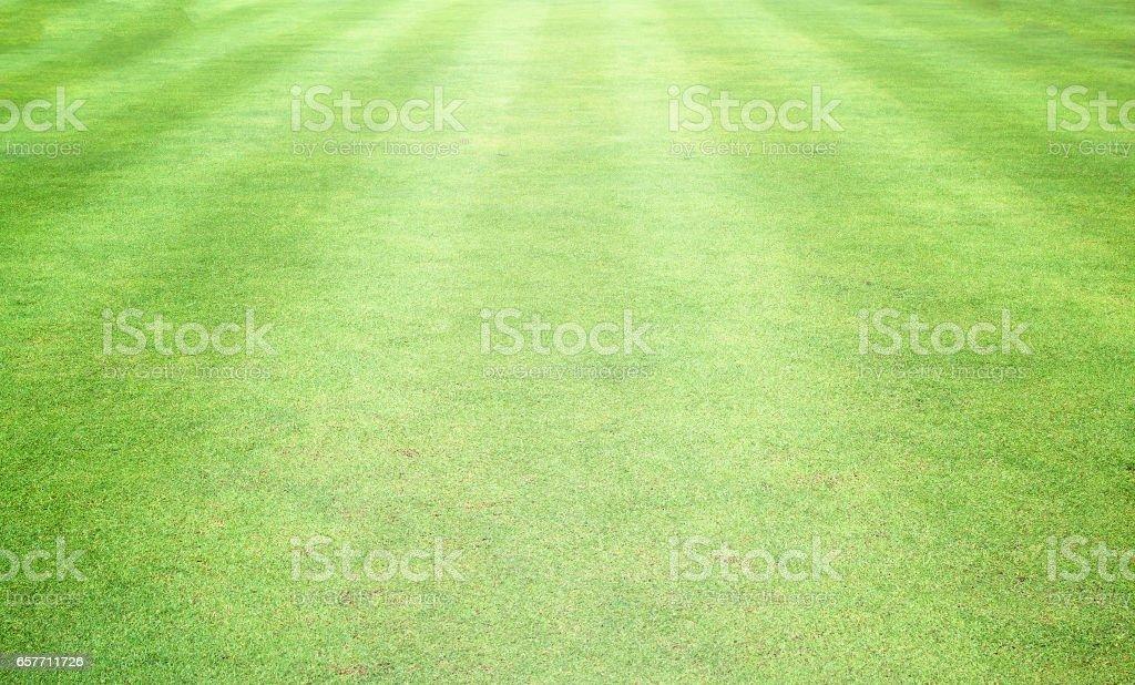 Golf Courses green lawn vector art illustration