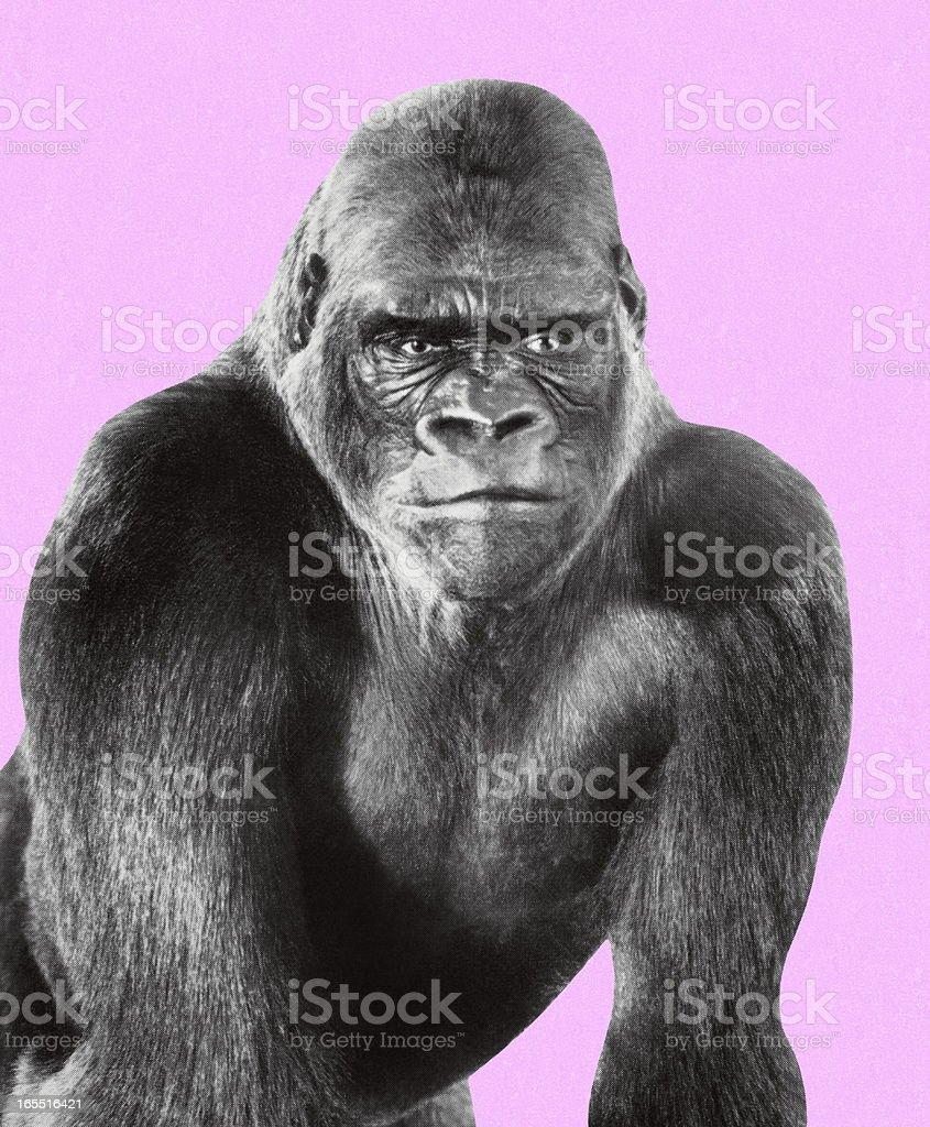 Gorilla royalty-free stock vector art