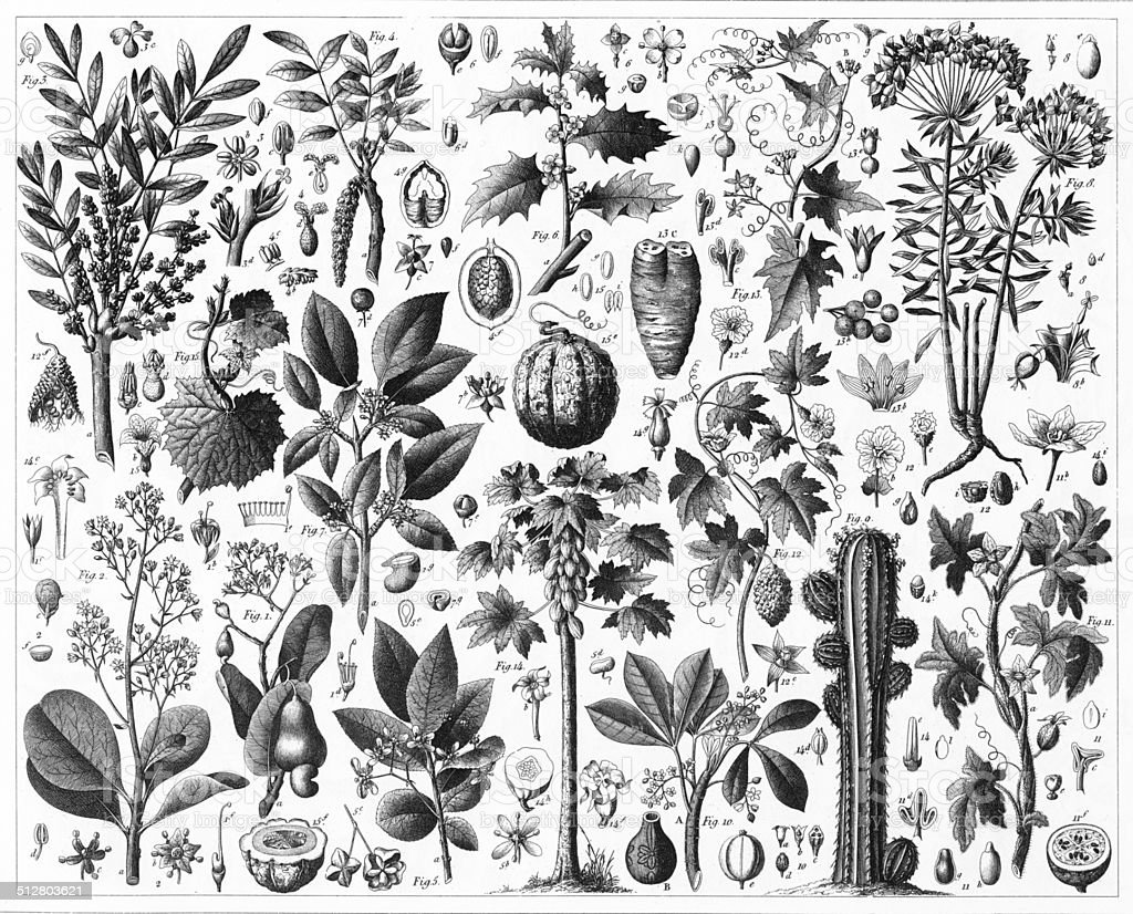 Gourd Spurge and Sumac vector art illustration