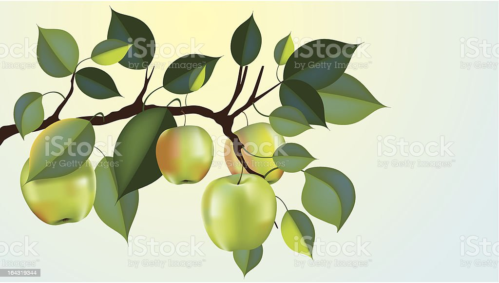 granny smith apple branch vector art illustration